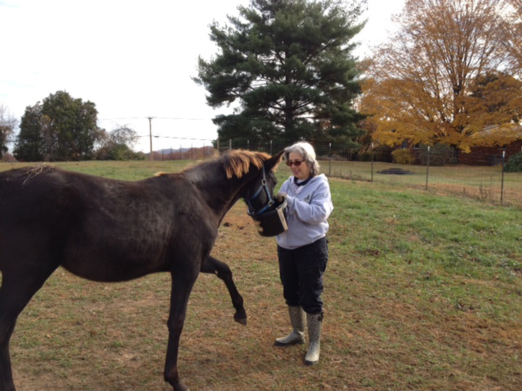 Joyce feeds a horse at Horse Haven of Tennessee.